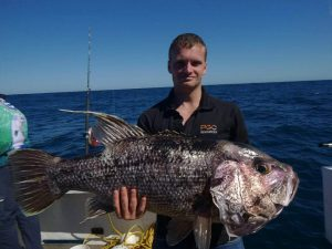 Abrolhos Islands Dhu Fish